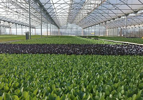 Viveiros de plantas hortícolas