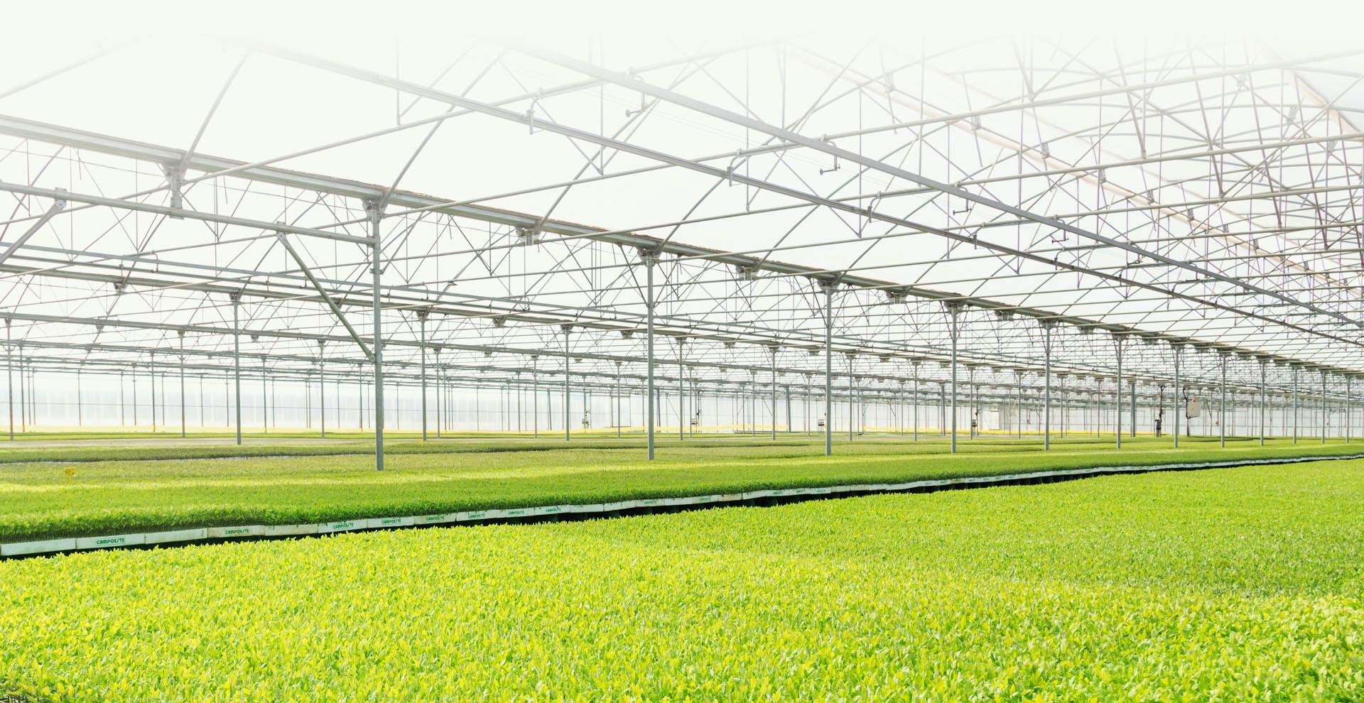 Viveiros de plantas agrícolas